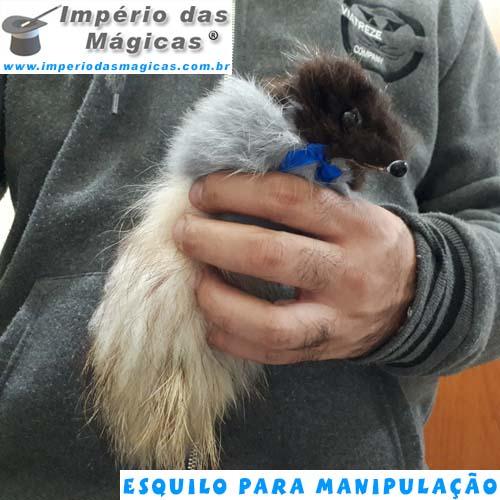 Esquilo para Manipulação, Estilo Mini Raccoon